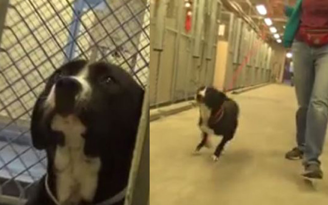 Shy Dogs Reaction To Being Adopted