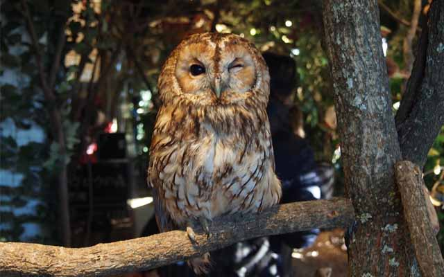 We Went To Kamakura Owl S Forest And Hung Out With Some Beautiful Owls Grape Japan