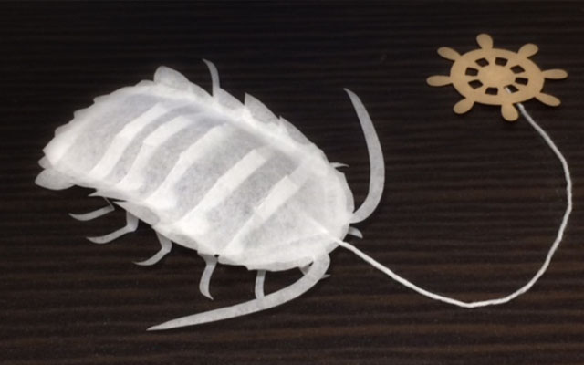 how to cook giant isopod