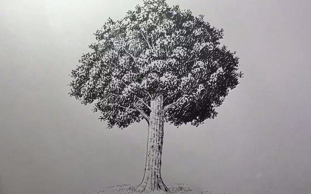 Japanese Artist Shows How To Effortlessly Draw This Realistic Tree