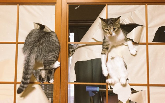 Cats Get Stucked After Too Much Poking Around On Japanese ...