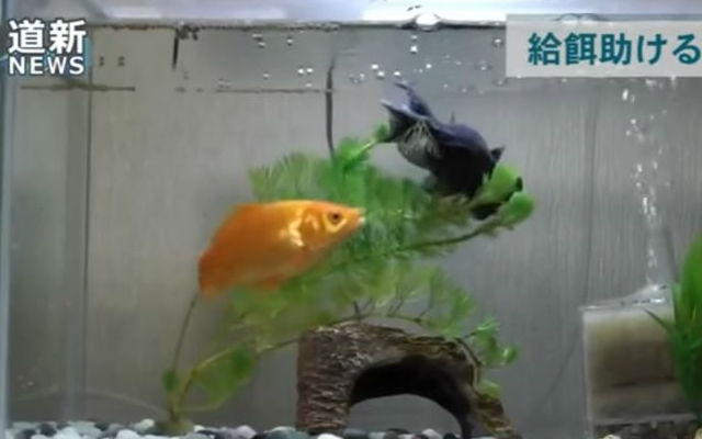 Care-Taking Goldfish Seems To Help Friend Who Struggles To