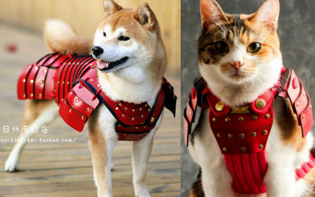 Unleash Your Pets Warrior Spirit With Cat And Dog Samurai Armor Grape Japan