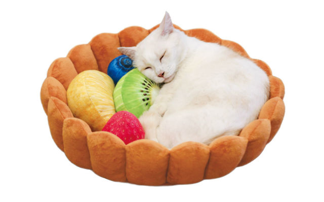 Cat Dog Bed Video