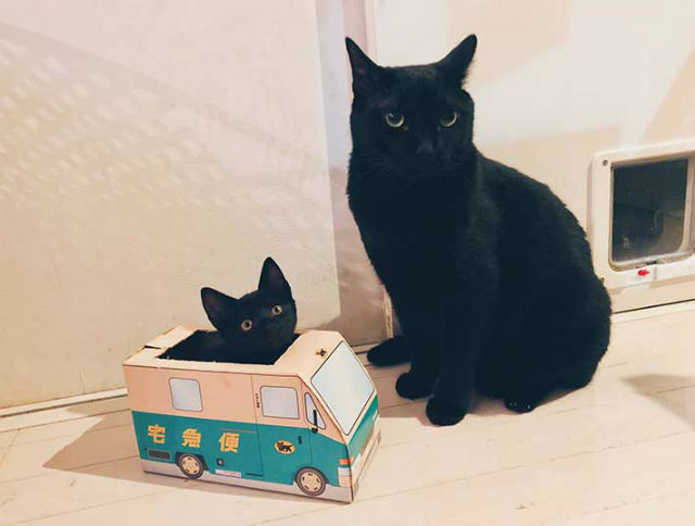 """Japan's """"black cat"""" delivery service gets its most adorable driver with  mini delivery truck – grape Japan"""