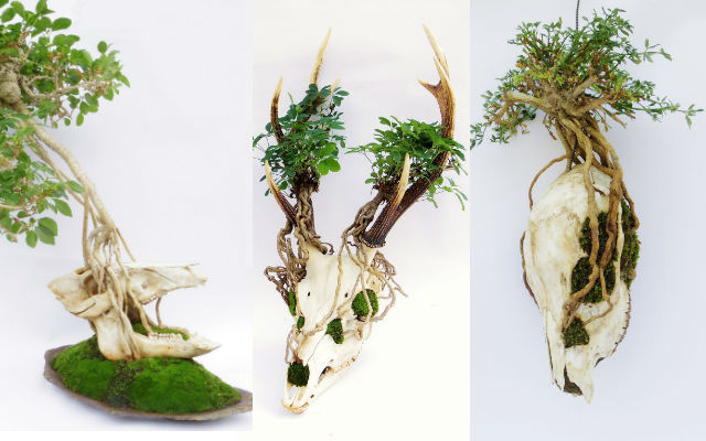 Animal Skull Bonsai Trees Weave Life And Death Together In Darkly Beautiful Art Grape Japan