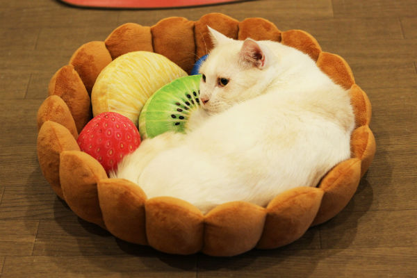 Turn Your Cat Into A Napping Dessert With The Kitty Fruit
