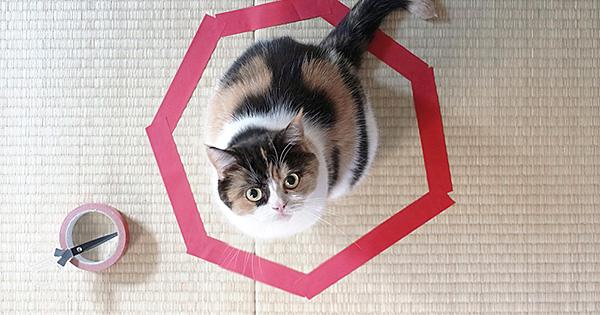 日本の猫サイト『guremike』さんで紹介された『猫転送装置 』が、アメリカや中国、日本のウェブメディアで紹介され話題沸騰中です。ついにはNHKでも番組で紹介。
