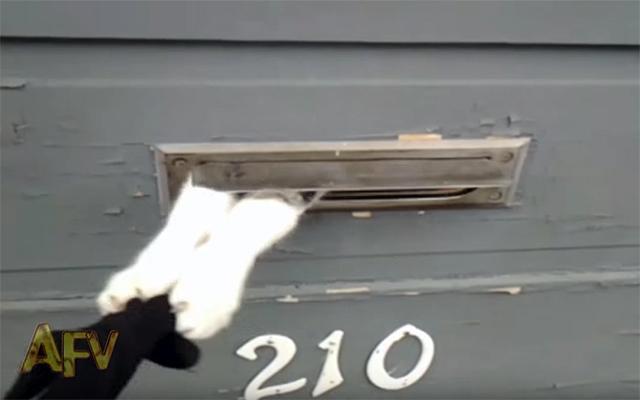 いらにゃい! 郵便物受取りを全力で拒否する猫がおもしろカワイイ «  grape