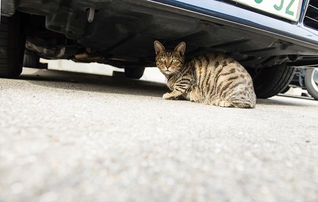 Cat under the car.