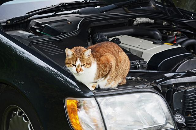 Katze auf einem Auto / Kater im Motorraum