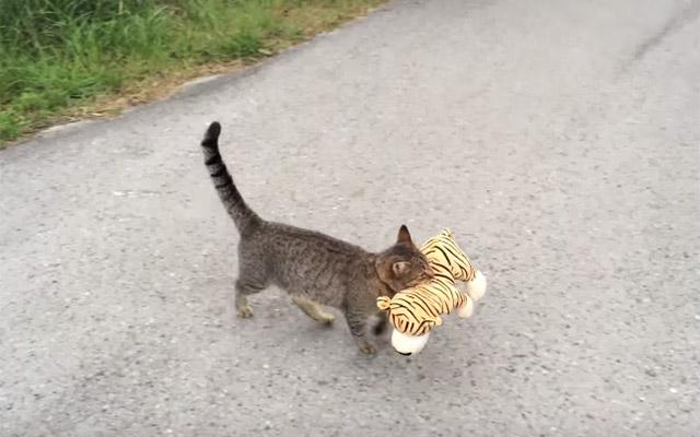 すまし顔でヌイグルミを運ぶ猫。後をつけていったら、衝撃のオチが…