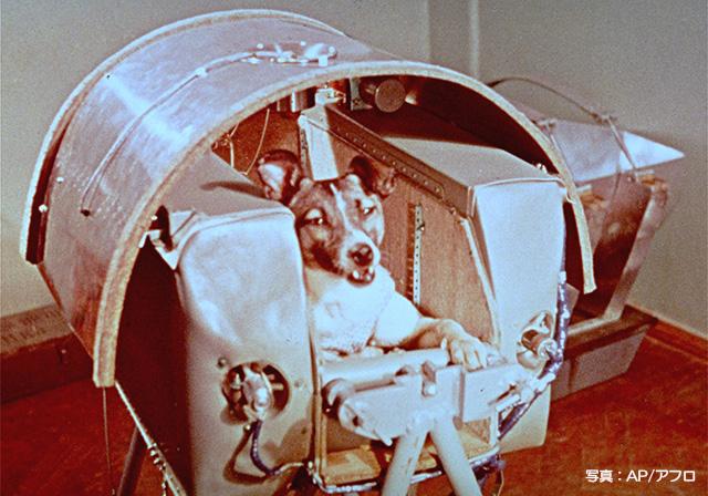 「ライカ犬 宇宙」の画像検索結果
