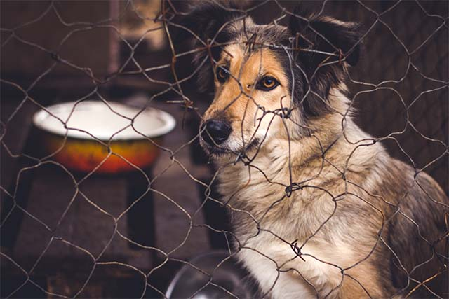 Shelter for homeless dogs, waiting for a new owner