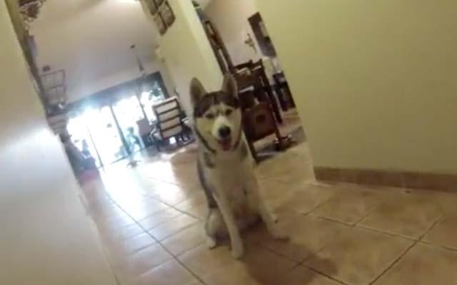 犬が雷を怖がったら… 動物愛護団体が発表した対策が助かる! – grape [グレイプ]