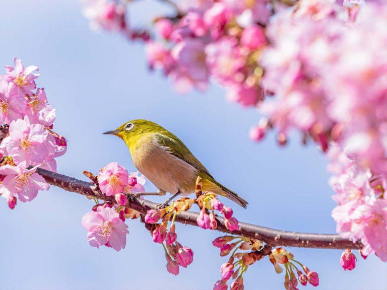 3月31日は奇跡の『トリプル開運日』! この日の縁起がいい行動は ...