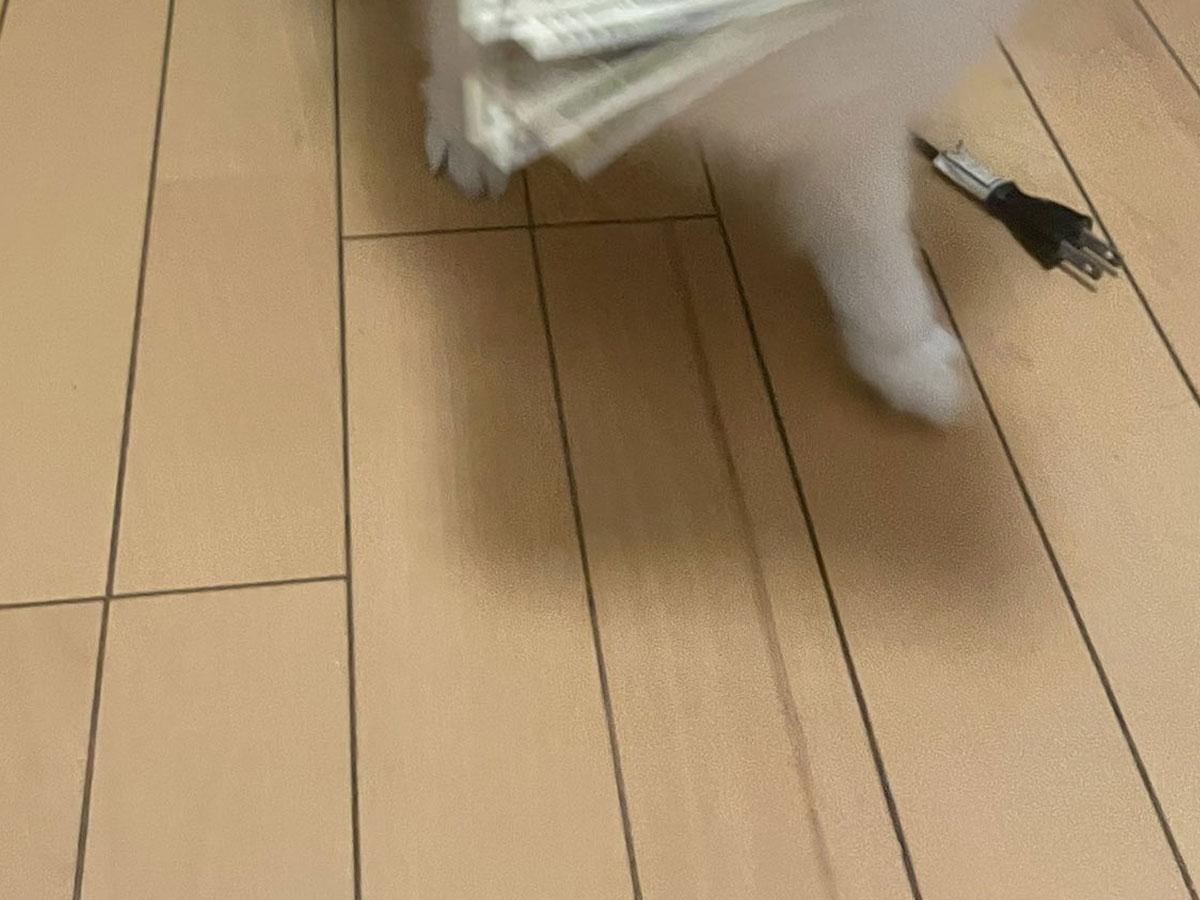 「どこから見つけてきたんだ」 犬がくわえて渡したものに、爆笑!