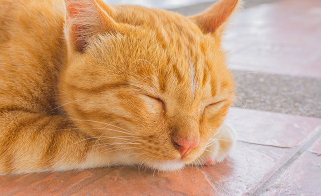 Pretty cat sleep in outside the house image.