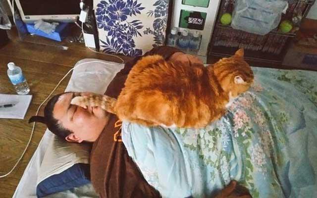 保護された猫が立派に成長 今では力士を包み込む癒しのニャンコ布団に ...