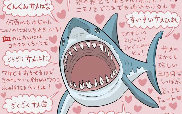 ホホジロザメの画像 p1_31