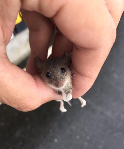 ネズミ 5