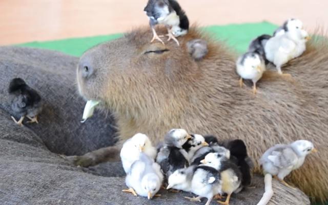 【名古屋】コモドドラゴン東山動植物園へ インドネシアから借り入れ大筋合意 YouTube動画>5本 ->画像>16枚