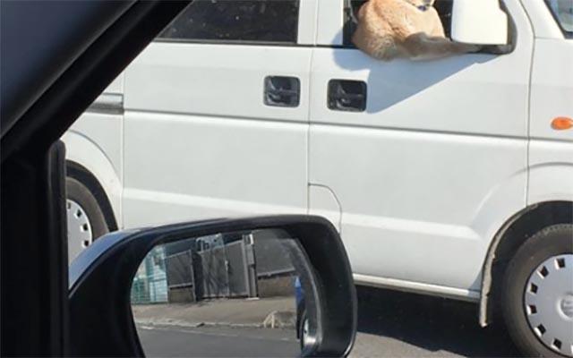トラックの運ちゃんが超イケメン!多くの女性を虜にした、たくましい腕 ...