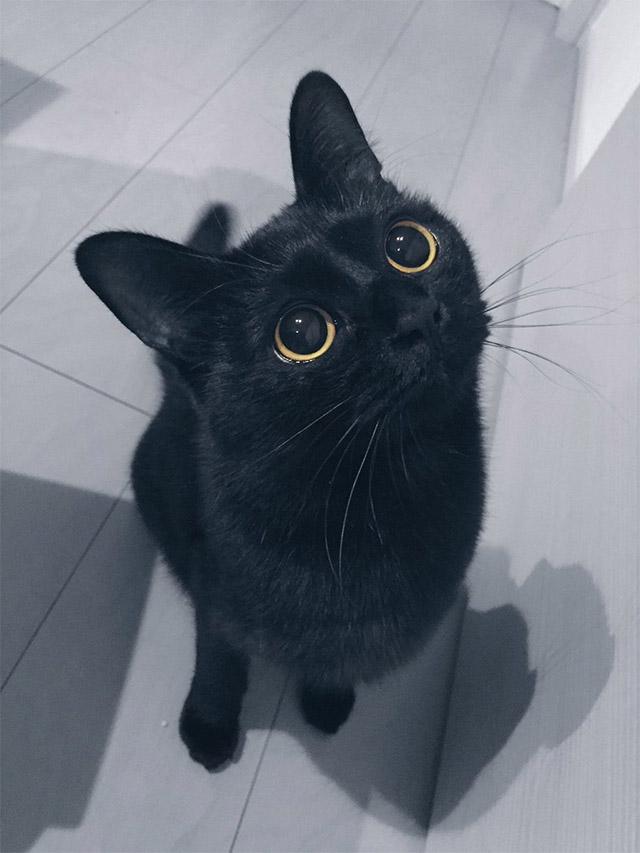 Black Bog Cat