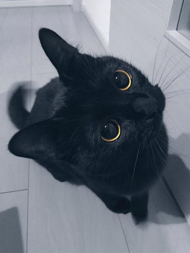 「可愛い」以外の語彙力が消えた あまりに可愛い黒猫ちゃん