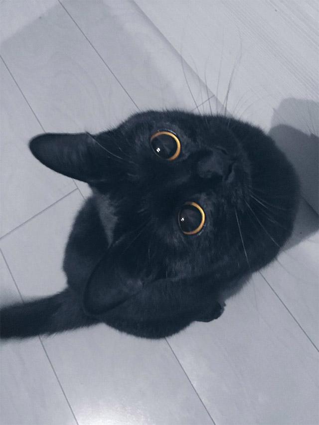 まん丸の目の黒猫