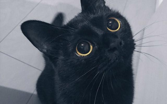 かわいい黒猫の魅力がいっぱい!高画質な画像まとめ