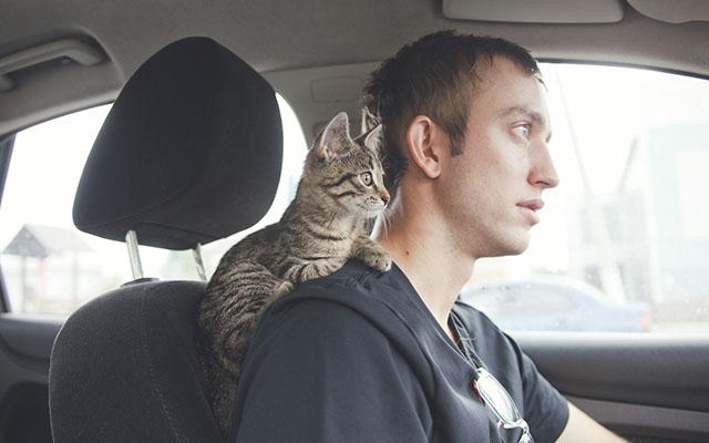 これ絶対欲しい!猫とのドライブが楽しい『猫専用ポケット』
