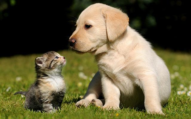 画像 「愛犬が、ネコ化した」 可愛すぎる姿にメロメロになる人が続出中