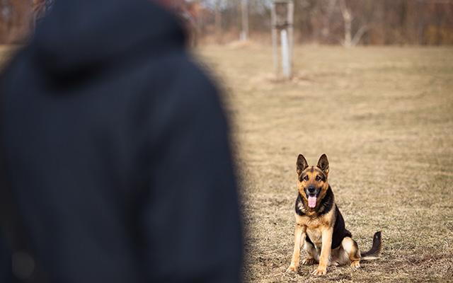 「本当に本人?」 飼い主の見た目が変わって警戒する犬、しかし