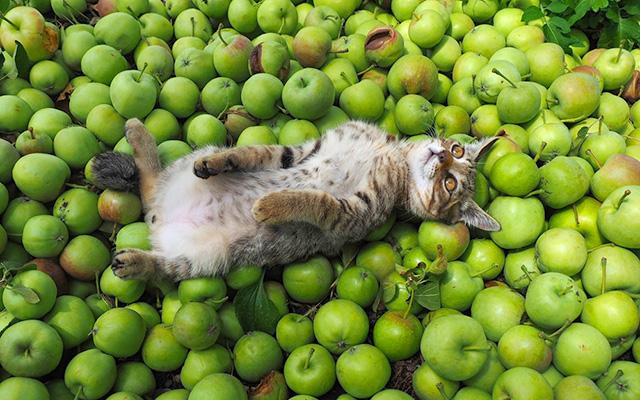可愛らしい子猫が徐々に成長 猫好きにはたまらない1年間の成長記録
