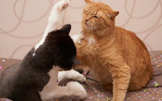 ケンカ開始から数秒後、ネコに異変が! 何が起こったんだ