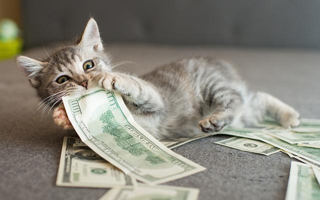 「え、皆そんなに使ってるの!?」ペットにかかる費用を調べてみたら意外な結果に