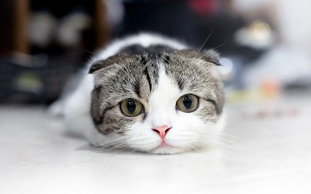 猫を飼うための条件いろいろ - konekono-heya.com