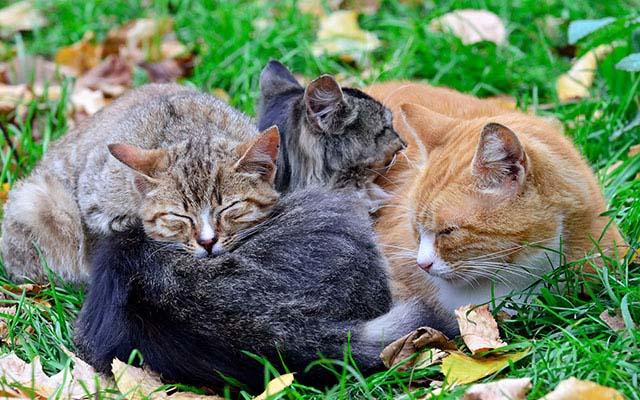 「ヤツに近寄るとこうなる」 群がる猫たちに衝撃が走る!