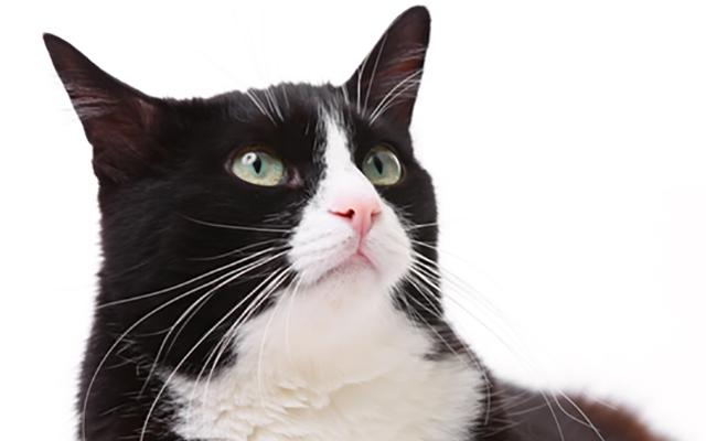 「ふ、フェイクだよね!?」 ある猫の声が、世界一ダンディ