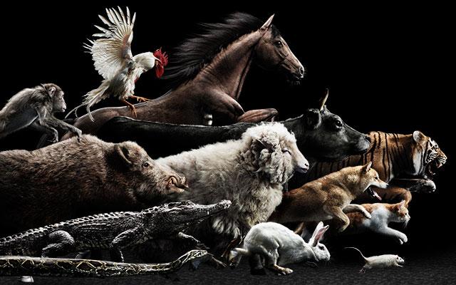 「本物の動物でやるんかい!」十二支の順番を決め直すガチレースをするってよ