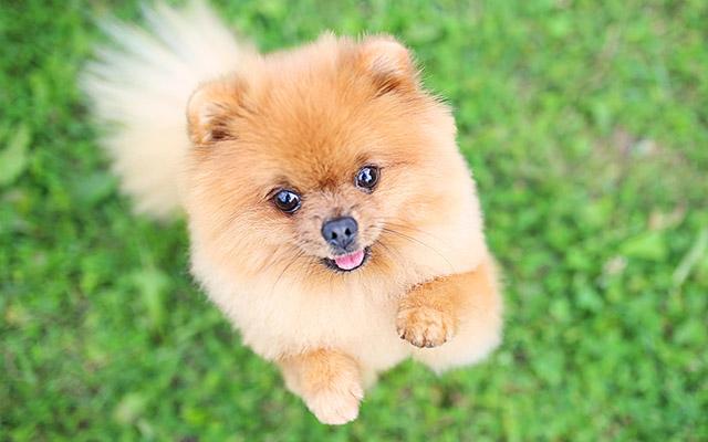 あなたの犬、1100万円で譲ってください」 男性の言葉に、飼い主たちは – grape [グレイプ]