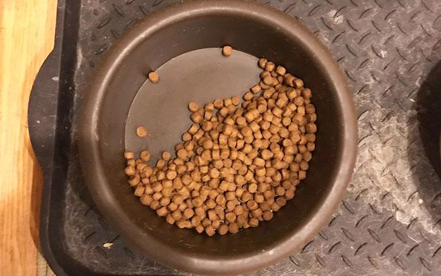 「ラブラドール 食べ残し」の画像検索結果