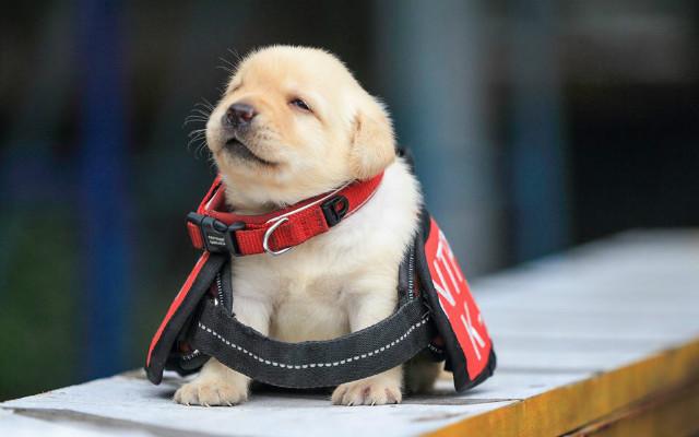 訓練どころか寝てばかり でも可愛いからOK! 警察犬の候補生にメロメロ