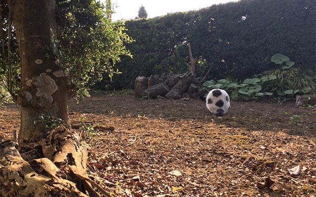 このサッカーボール、フワフワしてない? ヤツの擬態能力が高すぎる!
