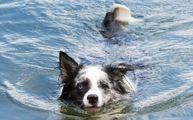 ピンチ! 犬のもとに、驚愕の速さでヒーロー現る