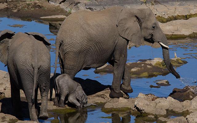 「とても知的な動物」 赤ちゃんゾウに危険が迫った時、大人のゾウは?