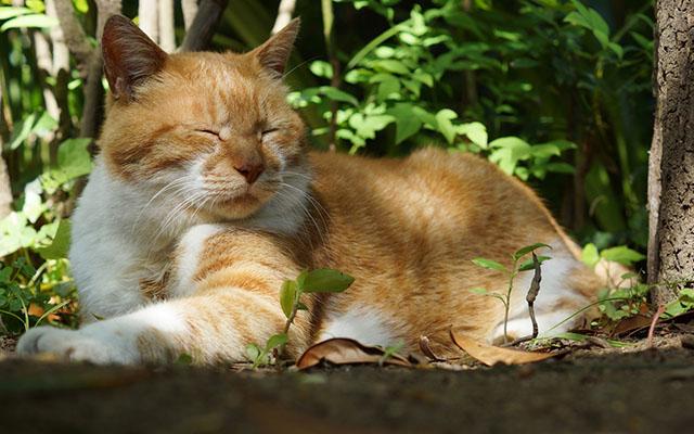 『高野山』は昔、猫の立ち入りが禁止されていた 理由が「分かる、分かりすぎる!」