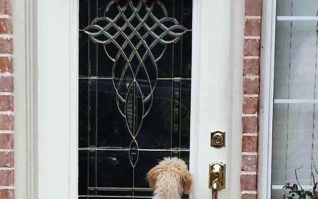 「めっちゃ覗いてる!」家出した愛犬が帰宅した 何を考えているのか