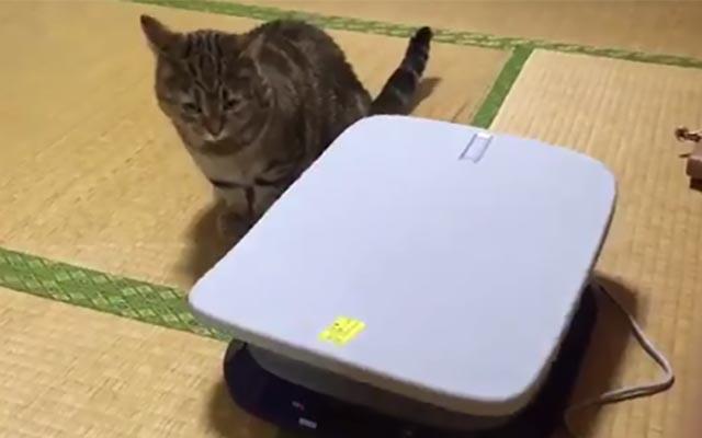 飼い主が使わなくなった『健康器具』 猫が乗ってみると?